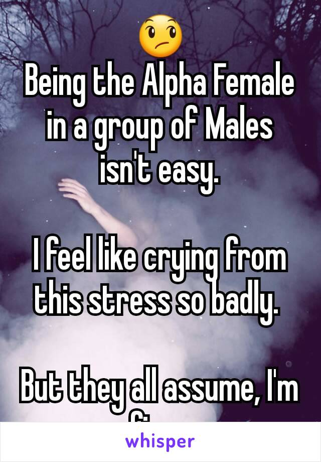 😞 Being the Alpha Female in a group of Males isn't easy.  I feel like crying from this stress so badly.   But they all assume, I'm fine.