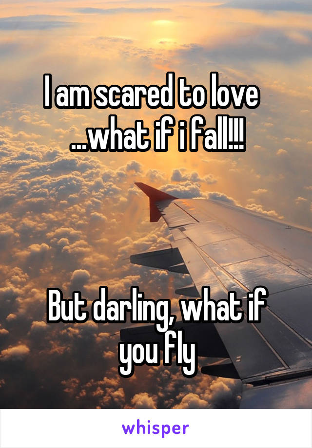 I am scared to love   ...what if i fall!!!    But darling, what if you fly