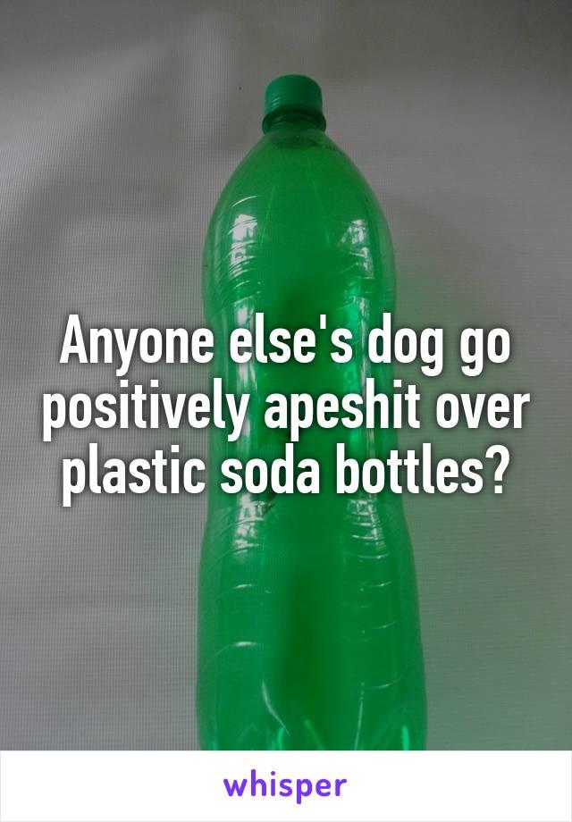 Anyone else's dog go positively apeshit over plastic soda bottles?