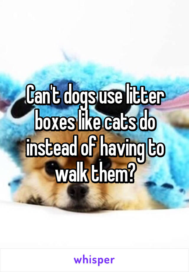 Can't dogs use litter boxes like cats do instead of having to walk them?
