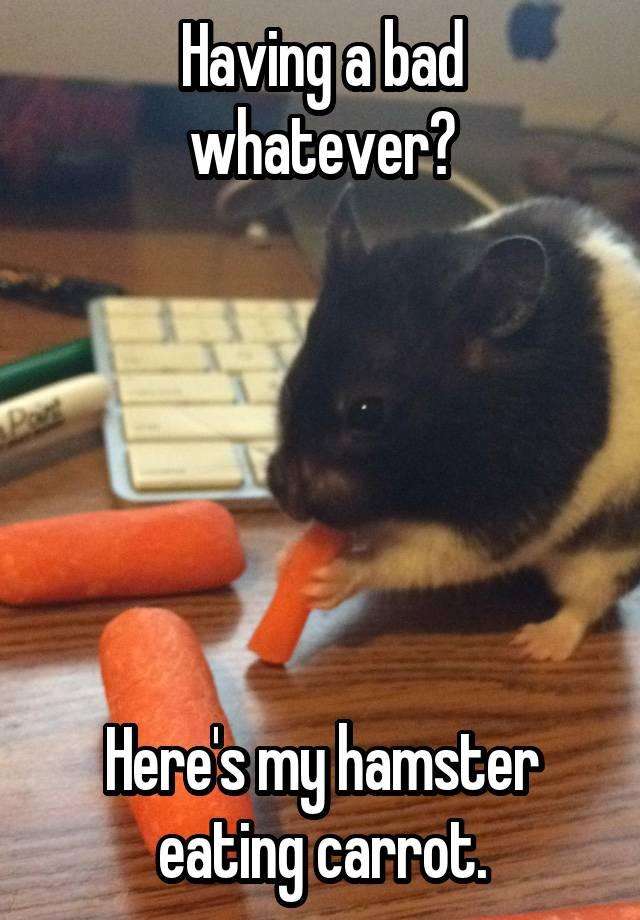 Having a bad whatever?       Here's my hamster eating carrot.