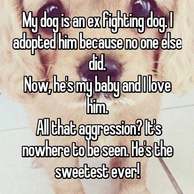 My dog is an ex fighting dog. I adopted him because no one else did. Now, he's my baby and I love him.  All that aggression? It's nowhere to be seen. He's the sweetest ever!
