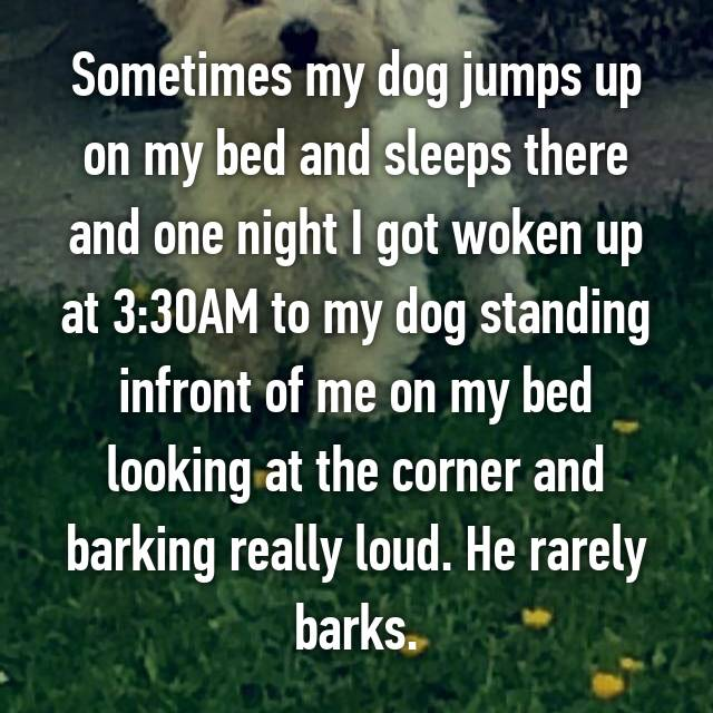 Sometimes my dog jumps up on my bed and sleeps there and one night I got woken up at 3:30AM to my dog standing infront of me on my bed looking at the corner and barking really loud. He rarely barks.