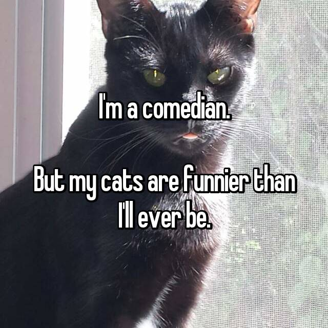 I'm a comedian.  But my cats are funnier than I'll ever be.
