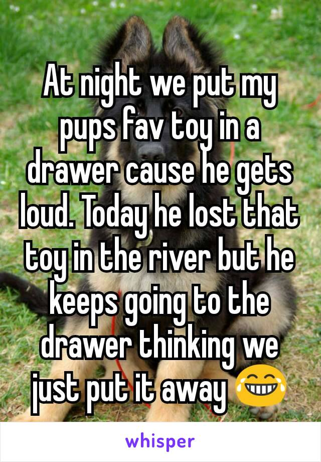 At night we put my pups fav toy in a drawer cause he gets loud. Today he lost that toy in the river but he keeps going to the drawer thinking we just put it away 😂