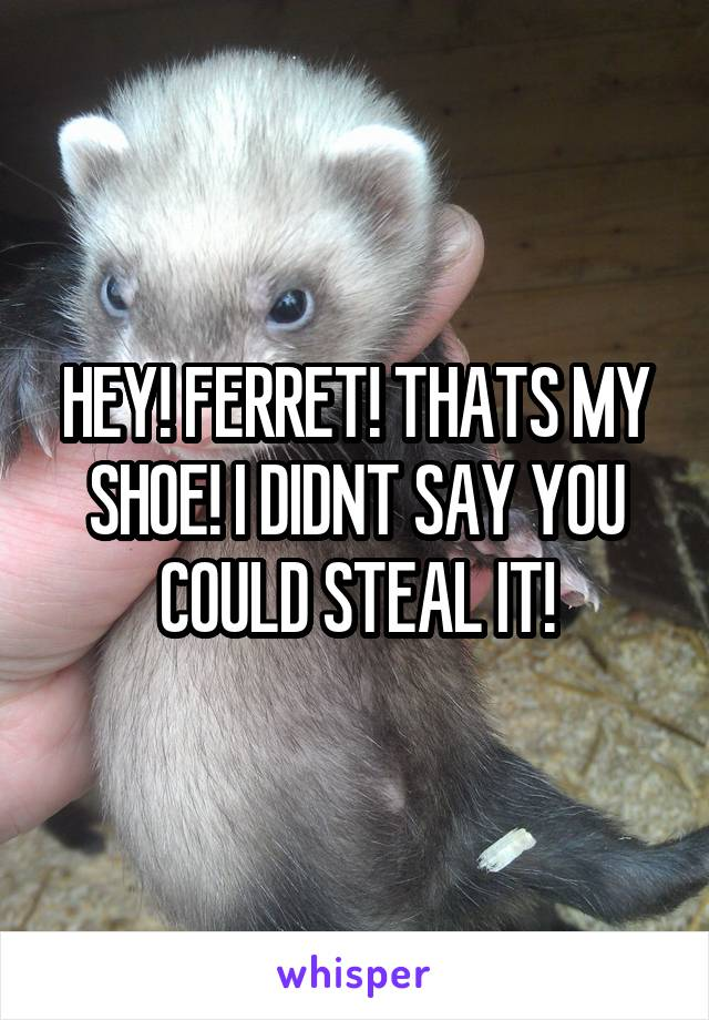 HEY! FERRET! THATS MY SHOE! I DIDNT SAY YOU COULD STEAL IT!