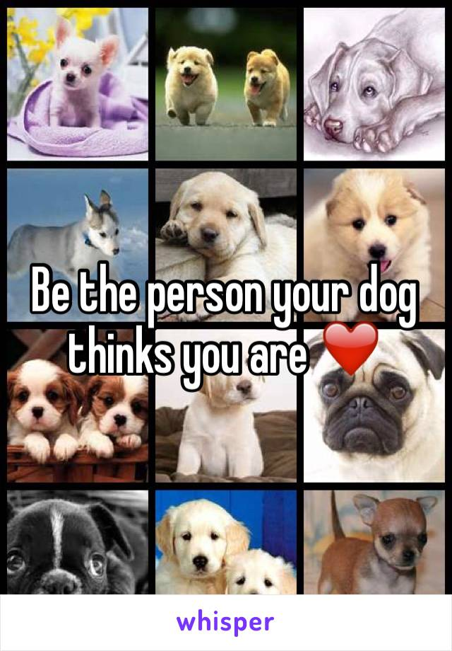 Be the person your dog thinks you are ❤️