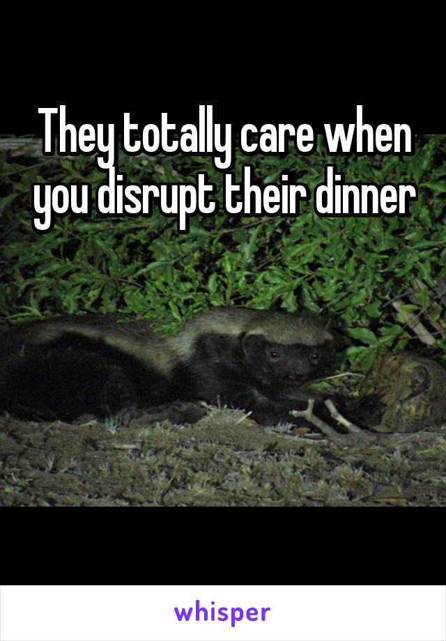 They totally care when you disrupt their dinner