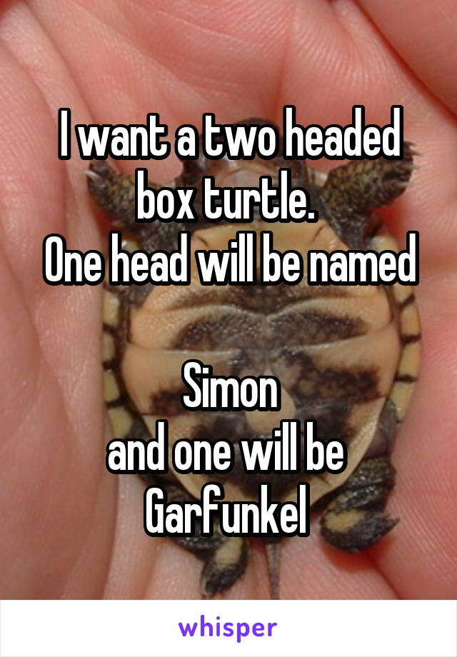 I want a two headed box turtle.  One head will be named  Simon and one will be  Garfunkel