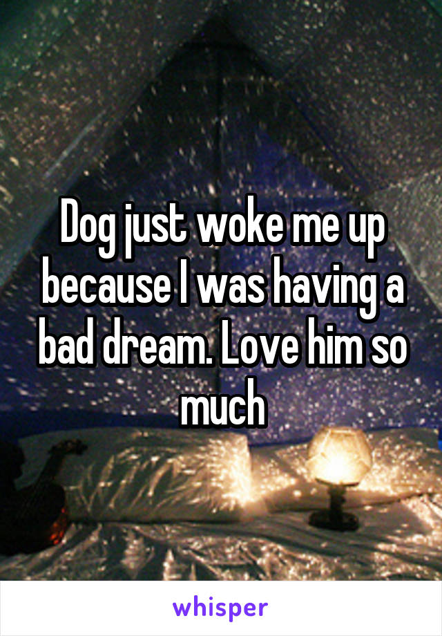 Dog just woke me up because I was having a bad dream. Love him so much