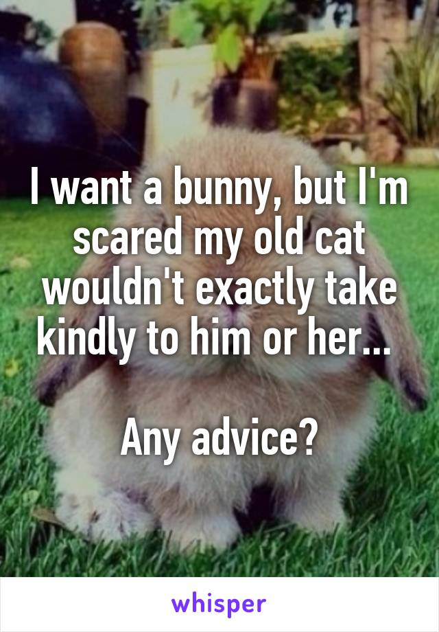 I want a bunny, but I'm scared my old cat wouldn't exactly take kindly to him or her...   Any advice?
