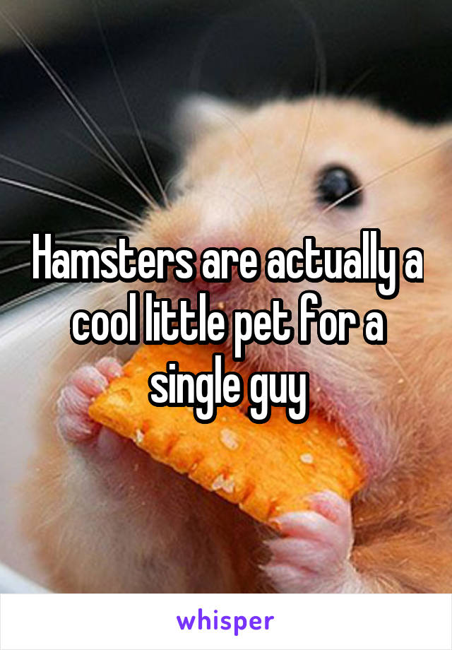 Hamsters are actually a cool little pet for a single guy