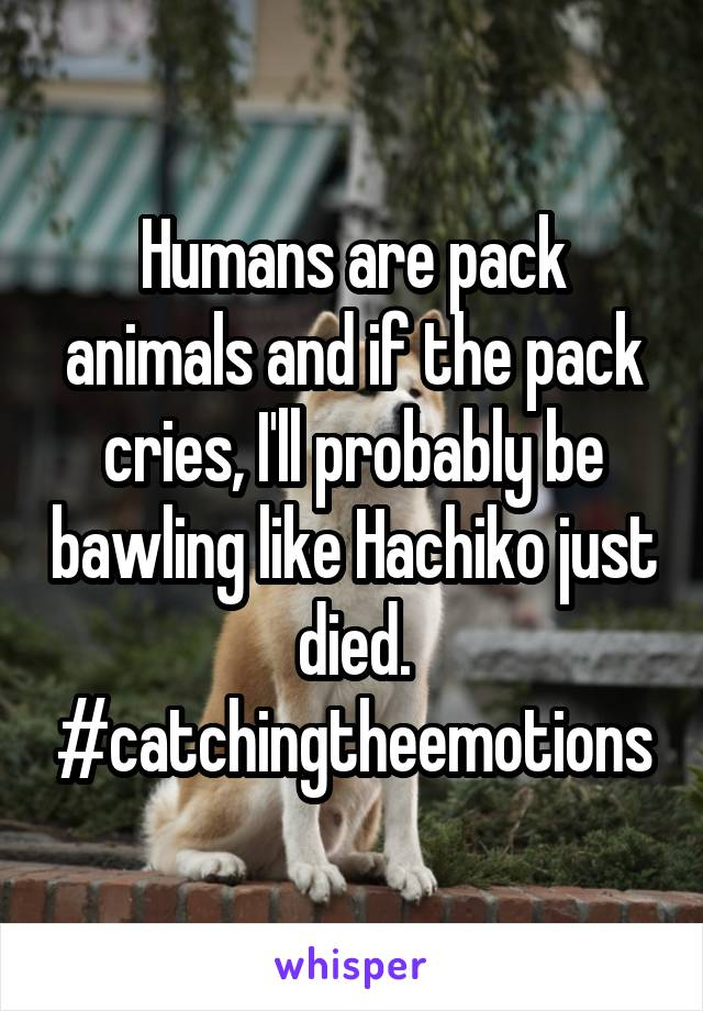 Humans are pack animals and if the pack cries, I'll probably be bawling like Hachiko just died. #catchingtheemotions