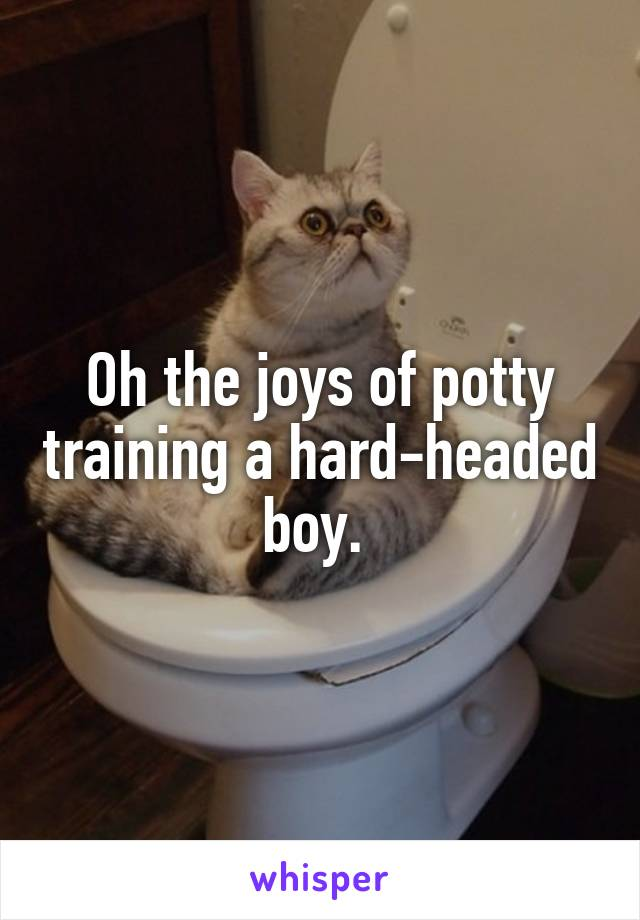 Oh the joys of potty training a hard-headed boy.