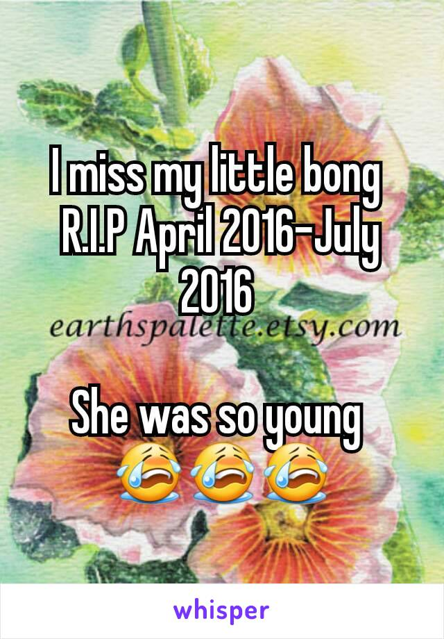 I miss my little bong  R.I.P April 2016-July 2016   She was so young  😭😭😭