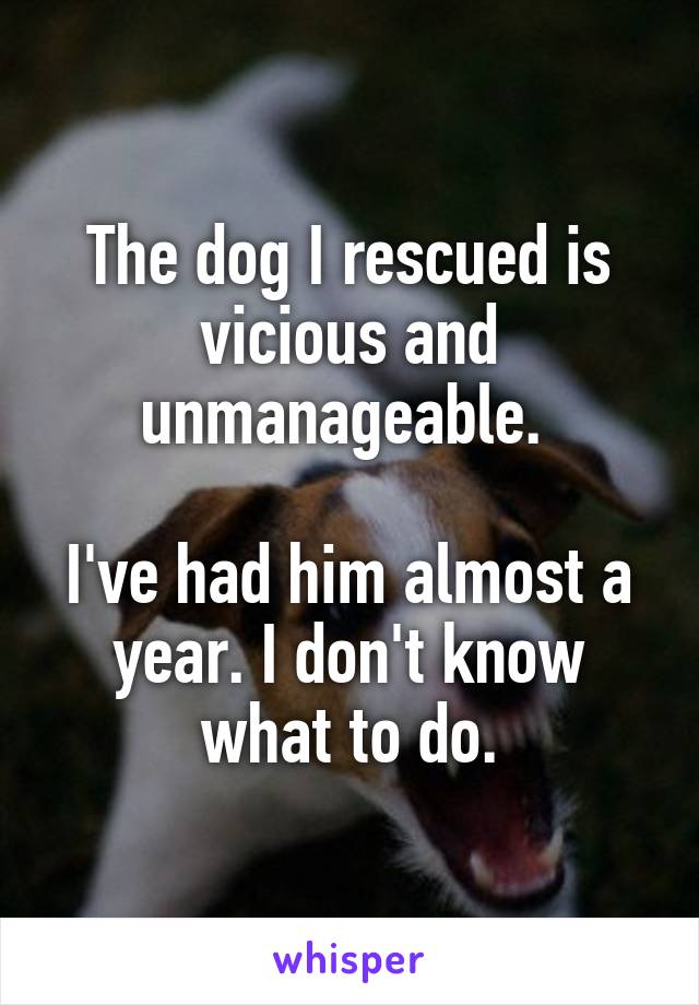 The dog I rescued is vicious and unmanageable.   I've had him almost a year. I don't know what to do.