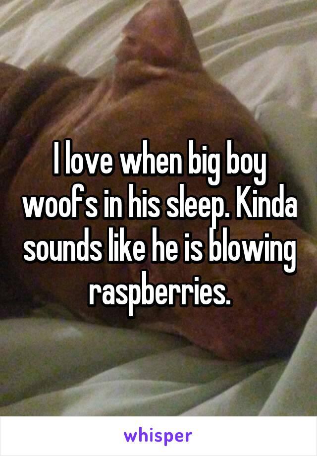 I love when big boy woofs in his sleep. Kinda sounds like he is blowing raspberries.