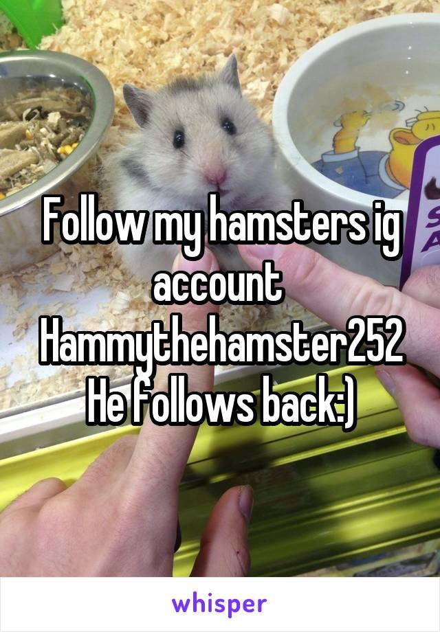Follow my hamsters ig account  Hammythehamster252 He follows back:)