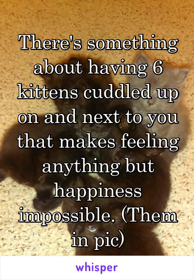 There's something about having 6 kittens cuddled up on and next to you that makes feeling anything but happiness impossible. (Them in pic)