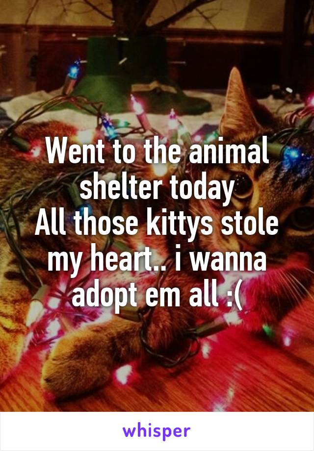 Went to the animal shelter today All those kittys stole my heart.. i wanna adopt em all :(
