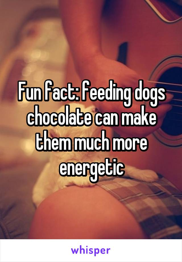 Fun fact: feeding dogs chocolate can make them much more energetic