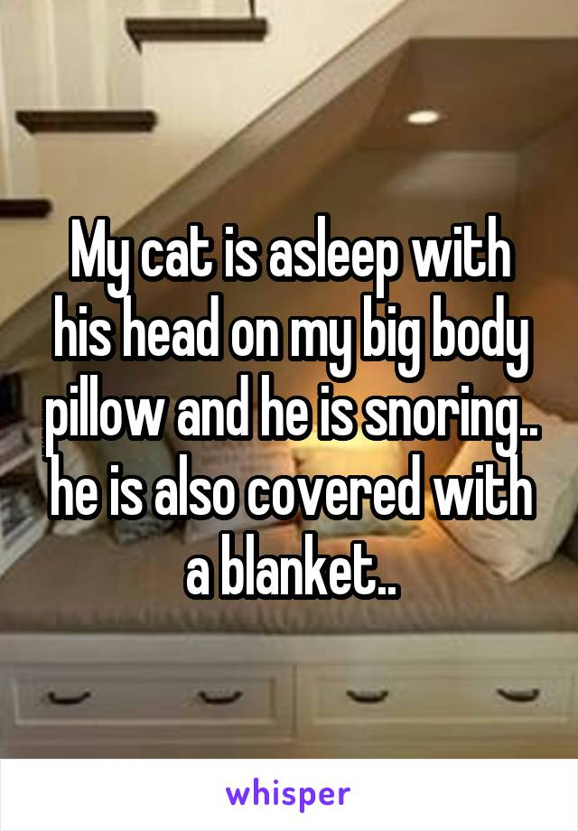 My cat is asleep with his head on my big body pillow and he is snoring.. he is also covered with a blanket..