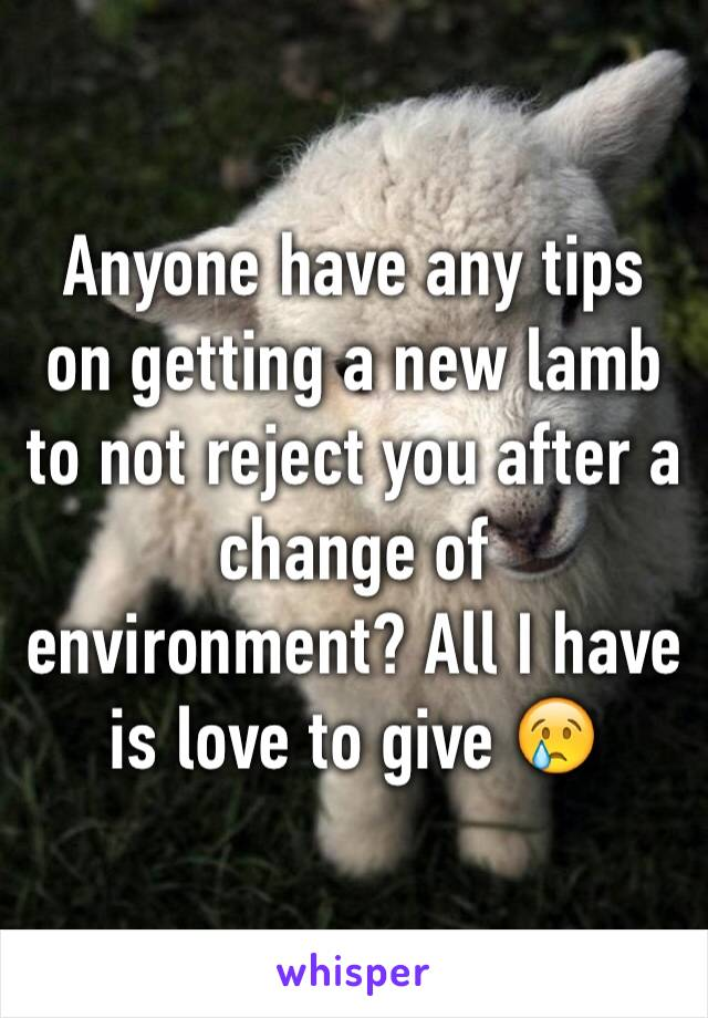 Anyone have any tips on getting a new lamb to not reject you after a change of environment? All I have is love to give 😢