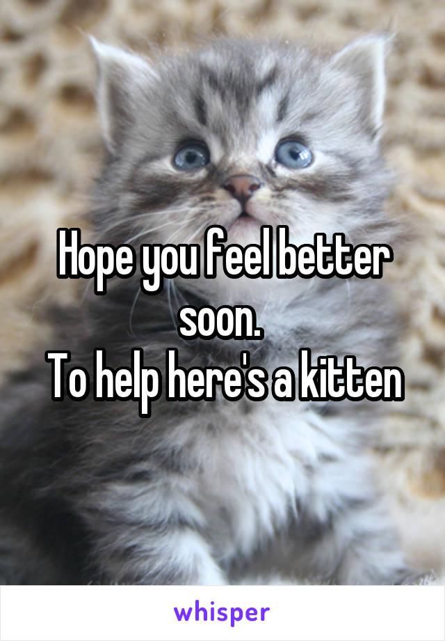 adopt a siberian kitten