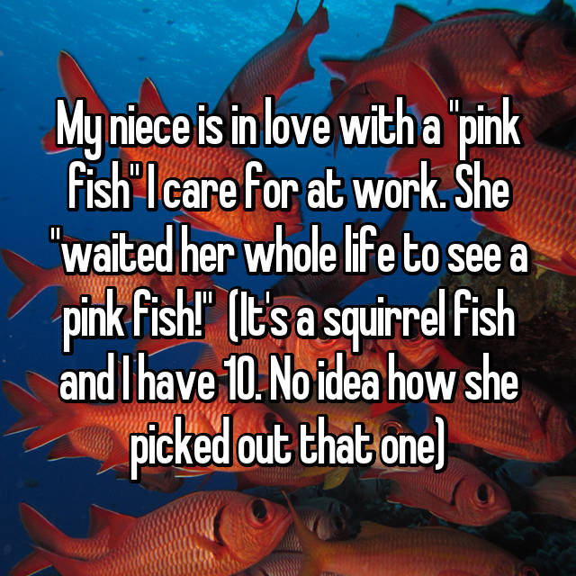 "My niece is in love with a ""pink fish"" I care for at work. She ""waited her whole life to see a pink fish!""  (It's a squirrel fish and I have 10. No idea how she picked out that one)"