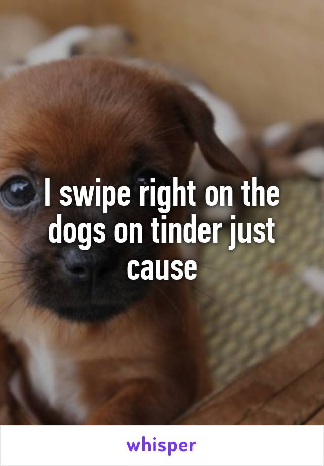 I swipe right on the dogs on tinder just cause