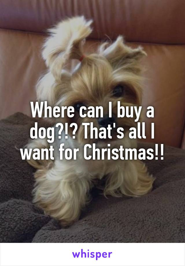 Where can I buy a dog?!? That's all I want for Christmas!!