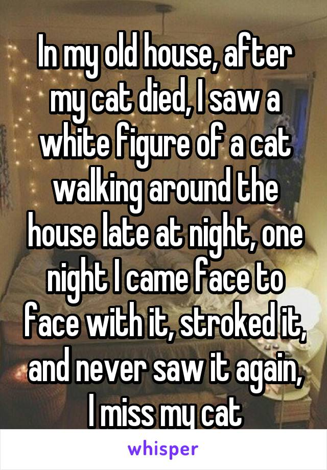 In my old house, after my cat died, I saw a white figure of a cat walking around the house late at night, one night I came face to face with it, stroked it, and never saw it again, I miss my cat