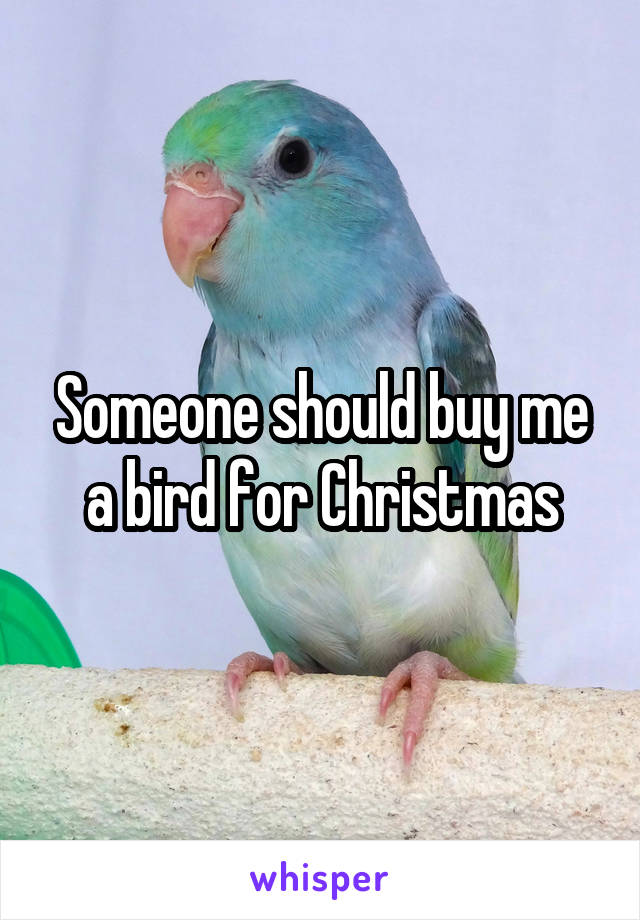 Someone should buy me a bird for Christmas