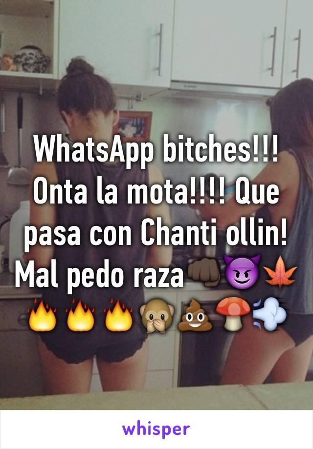 WhatsApp bitches!!! Onta la mota!!!! Que pasa con Chanti ollin! Mal pedo raza👊🏿😈🍁🔥🔥🔥🙊💩🍄💨