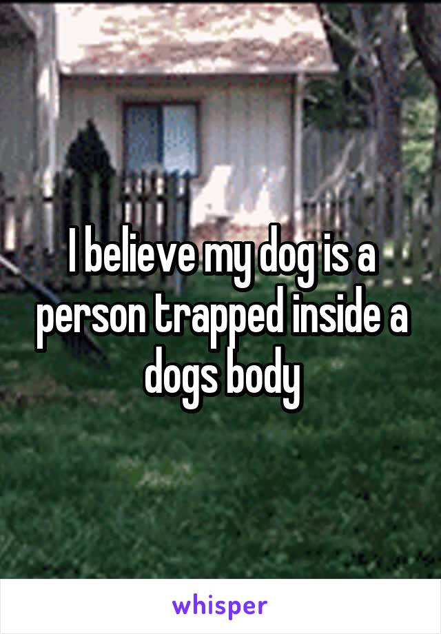 I believe my dog is a person trapped inside a dogs body
