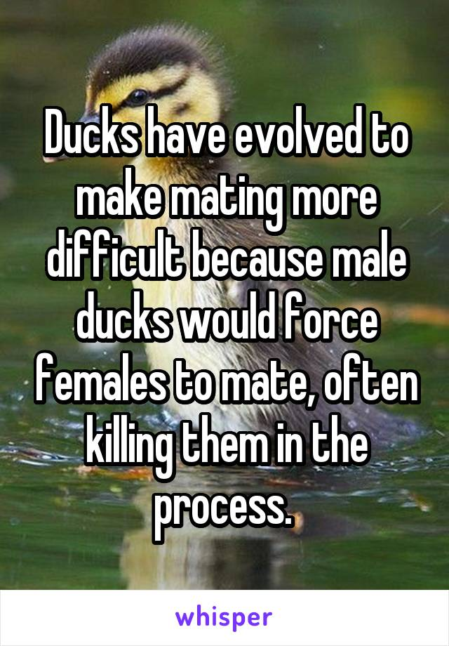 Ducks have evolved to make mating more difficult because male ducks would force females to mate, often killing them in the process.