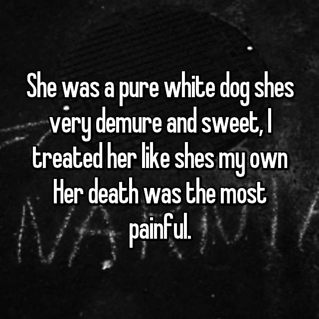She was a pure white dog shes very demure and sweet, I treated her like shes my own Her death was the most painful.