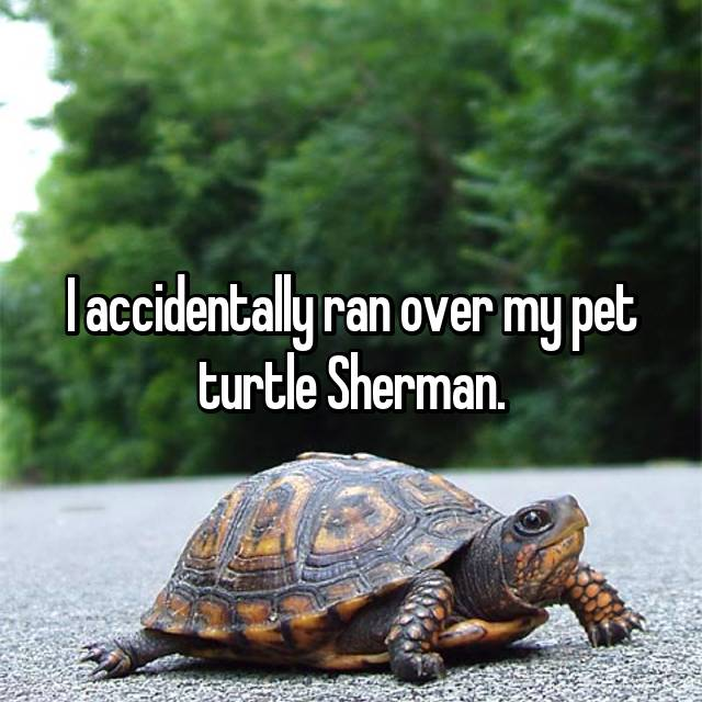 I accidentally ran over my pet turtle Sherman.