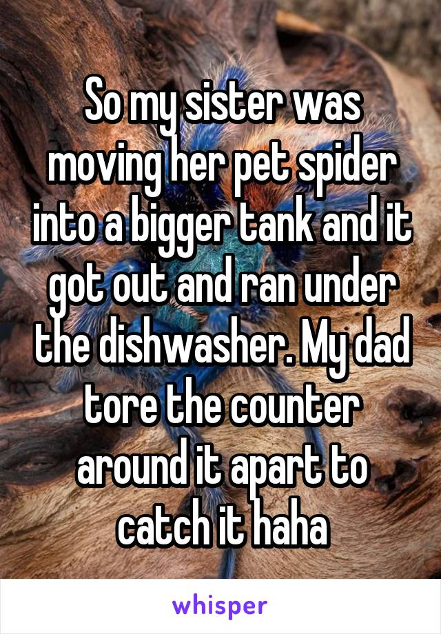 So my sister was moving her pet spider into a bigger tank and it got out and ran under the dishwasher. My dad tore the counter around it apart to catch it haha