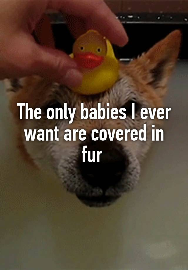 The only babies I ever want are covered in fur