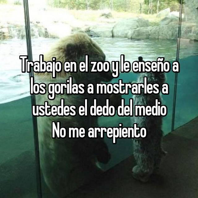 Trabajo en el zoo y le enseño a los gorilas a mostrarles a ustedes el dedo del medio No me arrepiento
