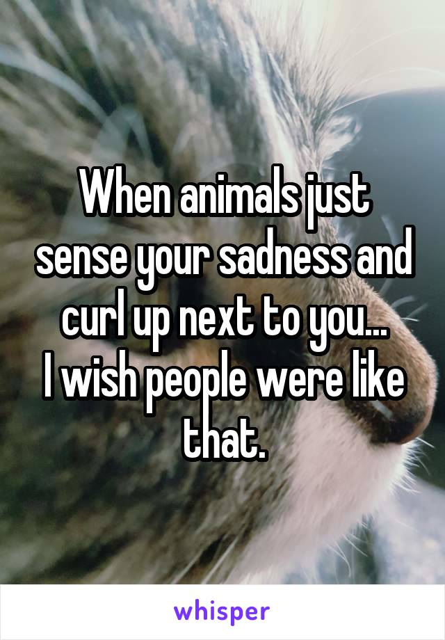 When animals just sense your sadness and curl up next to you... I wish people were like that.