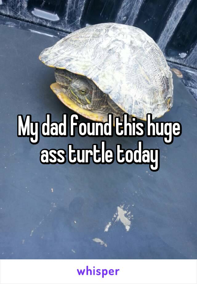 My dad found this huge ass turtle today