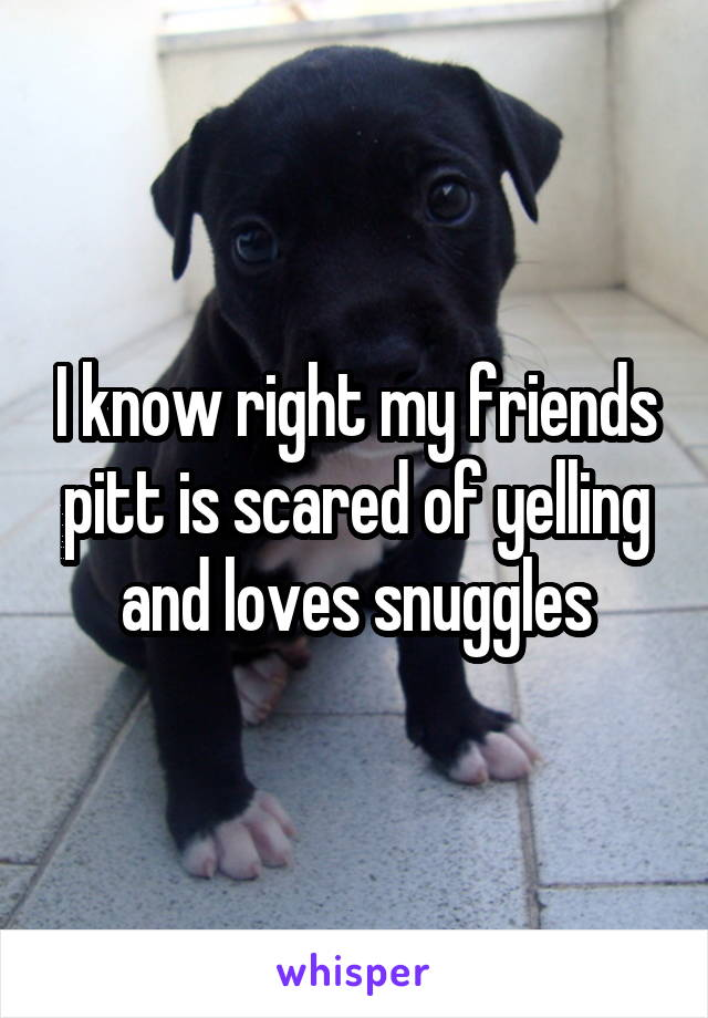 I know right my friends pitt is scared of yelling and loves snuggles