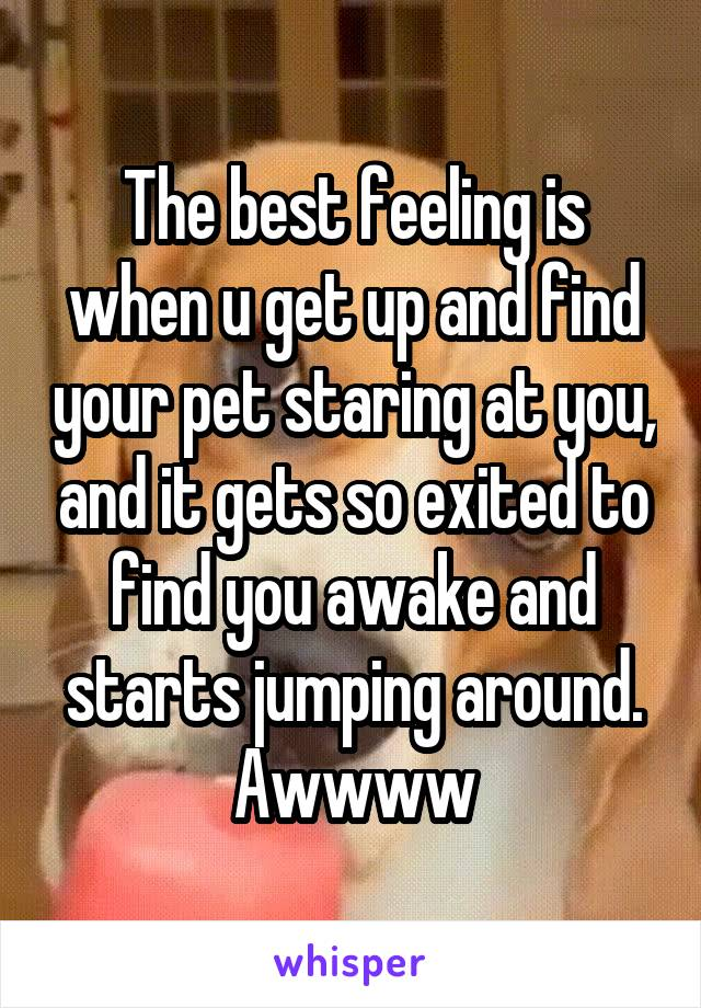 The best feeling is when u get up and find your pet staring at you, and it gets so exited to find you awake and starts jumping around. Awwww