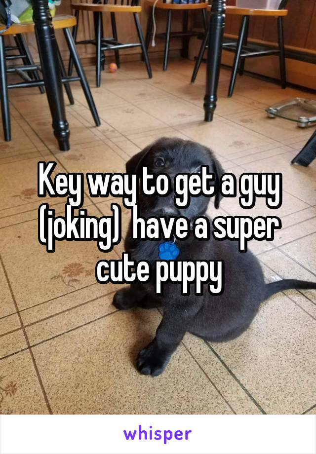 Key way to get a guy (joking)  have a super cute puppy