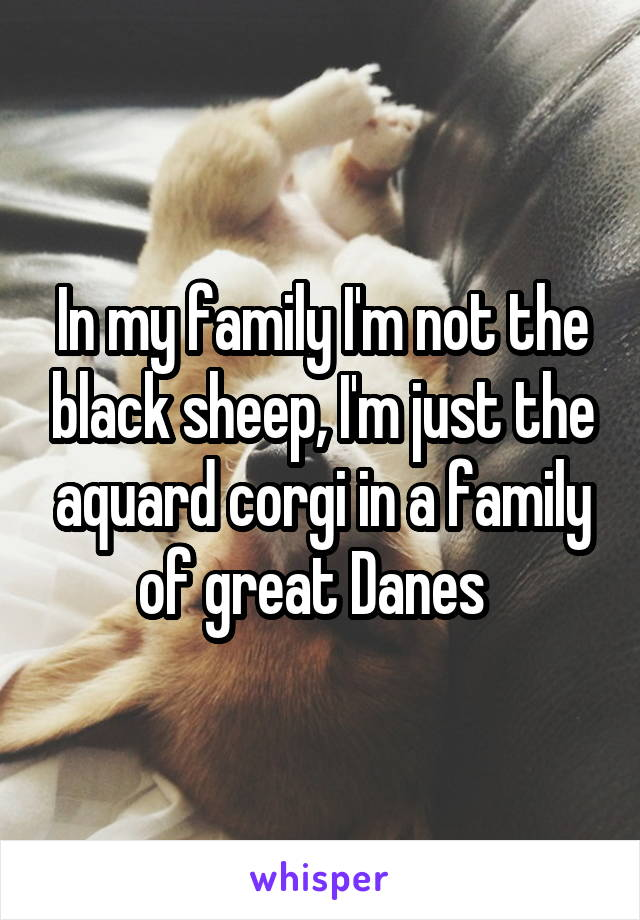 In my family I'm not the black sheep, I'm just the aquard corgi in a family of great Danes