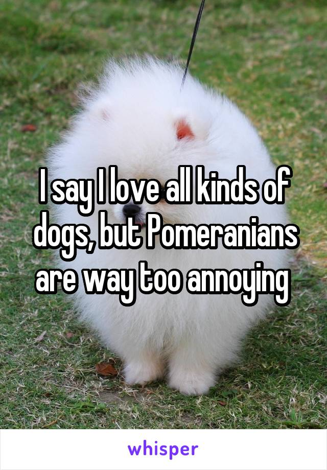 I say I love all kinds of dogs, but Pomeranians are way too annoying