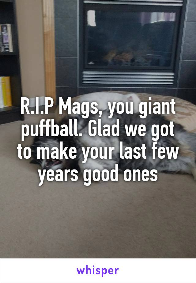 R.I.P Mags, you giant puffball. Glad we got to make your last few years good ones