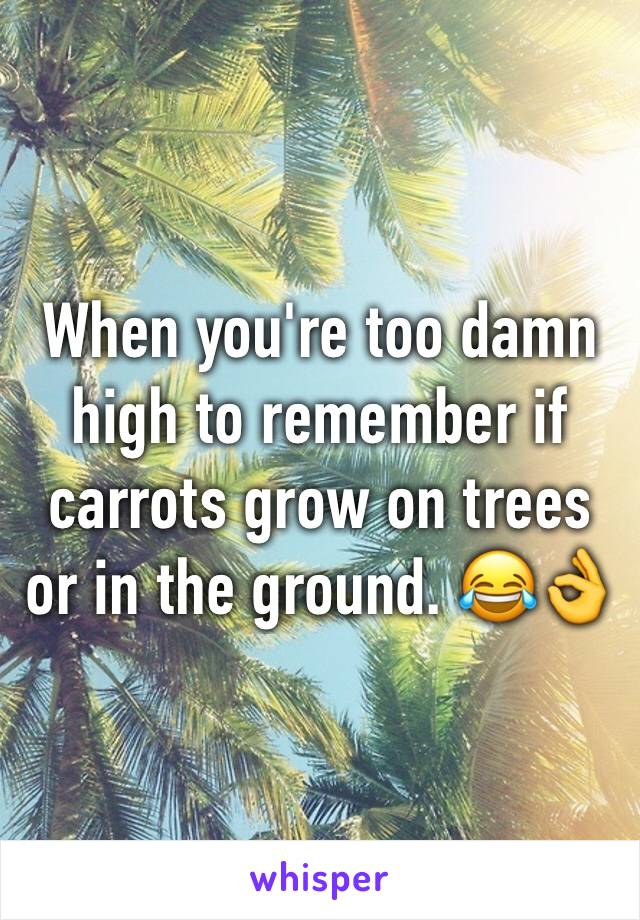 When you're too damn high to remember if carrots grow on trees or in the ground. 😂👌
